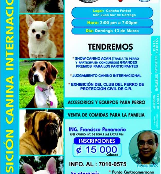 Inscribe tu ejemplar en la Expo Canina Internacional! Domingo 13 Marzo