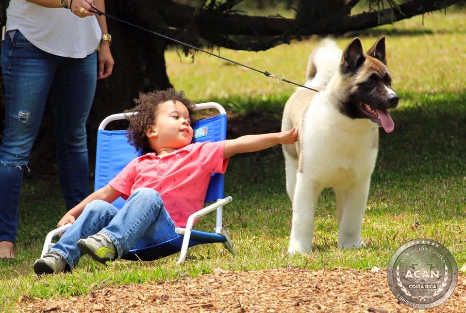 Yo quiero un perro!! Por. Sergio Oviedo