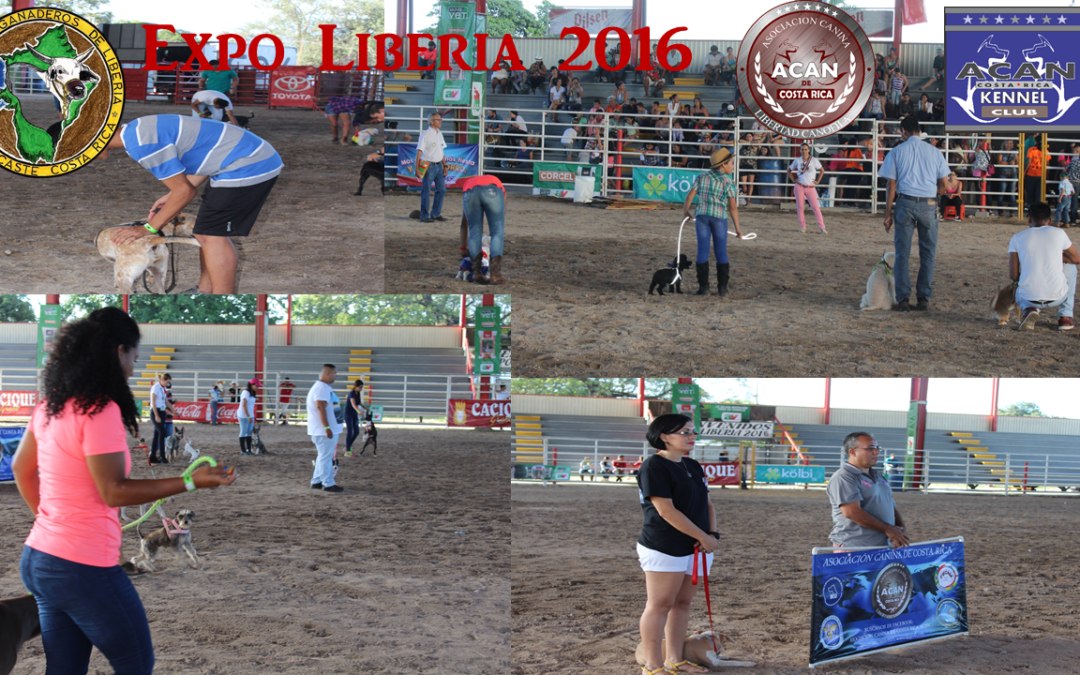 EXPO LIBERIA 2016