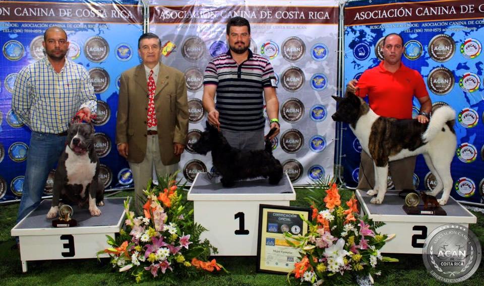 EXPO CANINA ACAN Nacional Julio 2016
